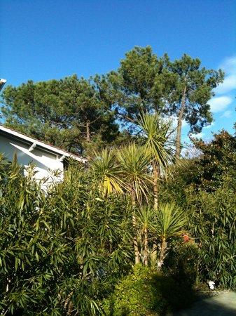 Maison Arbolateia Chambres d'hotes : jardin