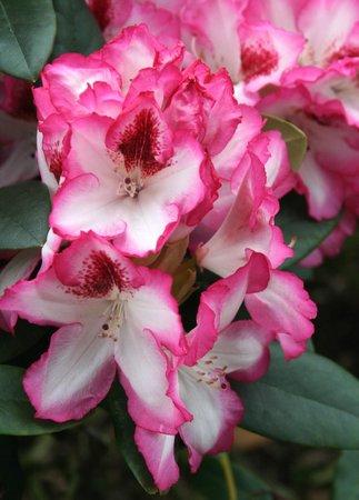 Rhododendronpark Bremen: 39