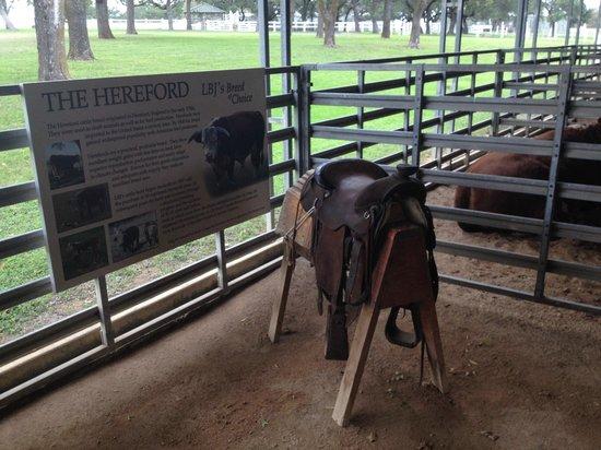 Lyndon B. Johnson National Historical Park: скудные экспонаты ранчо