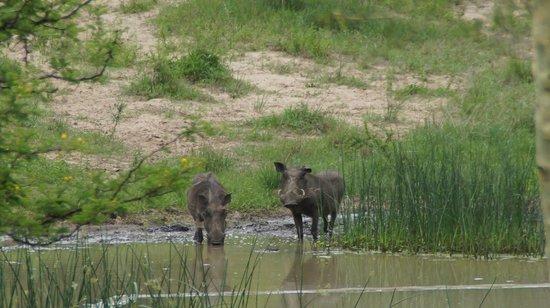 Makhasa Game Reserve and Lodge: Wasserloch