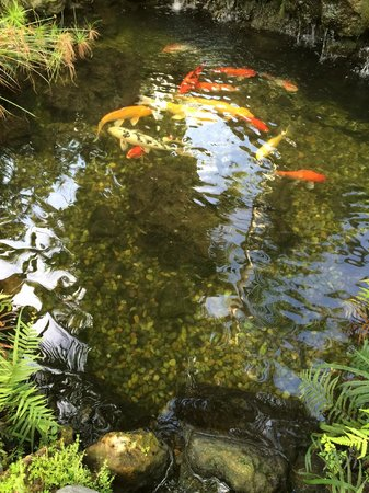 Almond Tree Inn Koi Pond