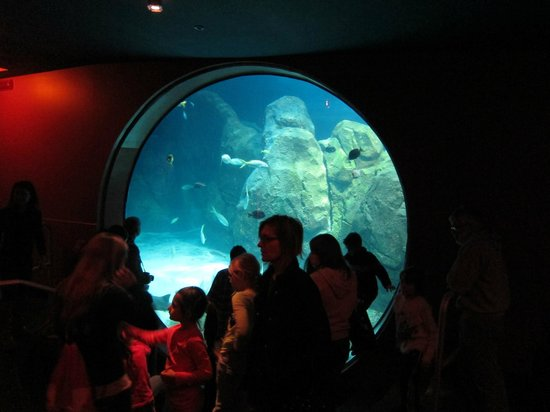 Adventure Aquarium: Large window