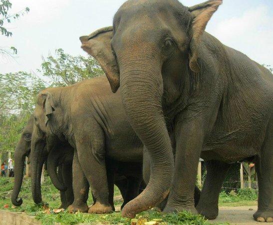 Top Garden Boutique Guesthouse : elephant santurary