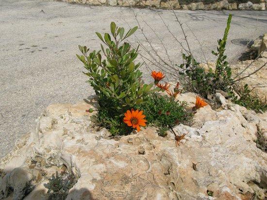 Jerusalem Botanical Gardens: in South Africa section