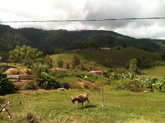 Restaurante El Rancho del Sapito: Vista desde la parte de la mini-granja