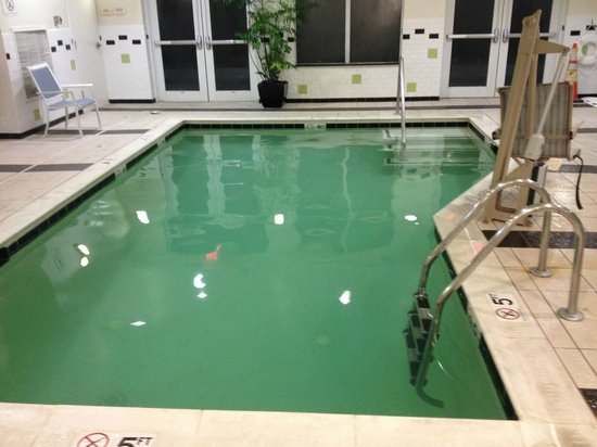 Fairfield Inn & Suites Washington, DC/New York Avenue: Green Pool (looks much more dark green in person)