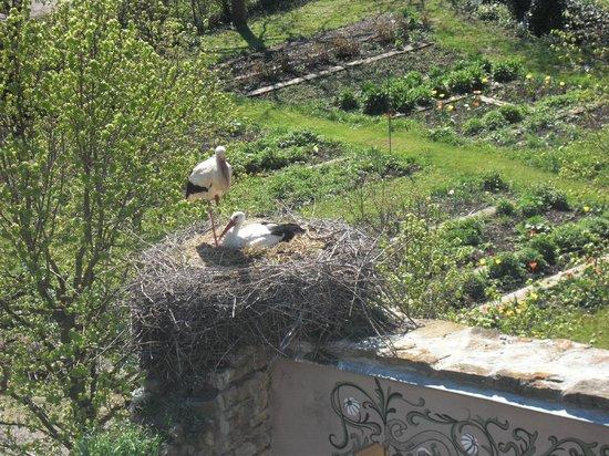 Parc Attractions Haut Rhin: Nid de cigogne