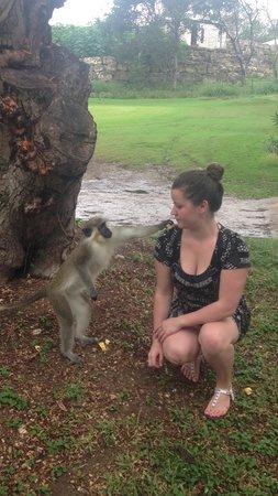 Barbados Excursions - Monkey Tours: monkey pic 3