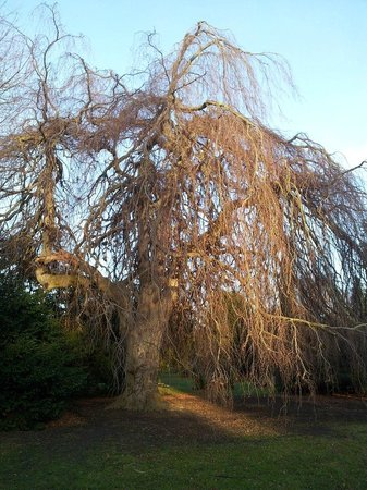 Assistenzfriedhof (Assistens Kirkegård): сказочное дерево