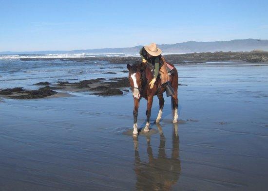 Ricochet Ridge Ranch: Giving my horse some love