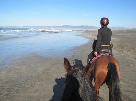 Ricochet Ridge Ranch: My horses ears! and Vida up ahead