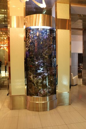 Night Times Square: Aquarium im Eingangsbereich