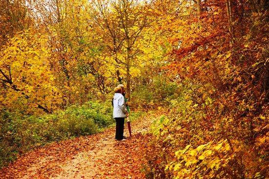 Kneipp-Kurhotel-Heikenberg: Wanderung im Herbst