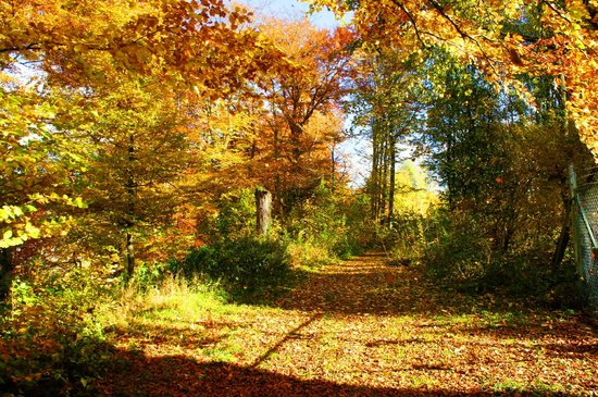Kneipp-Kurhotel-Heikenberg: Märchen im Herbst