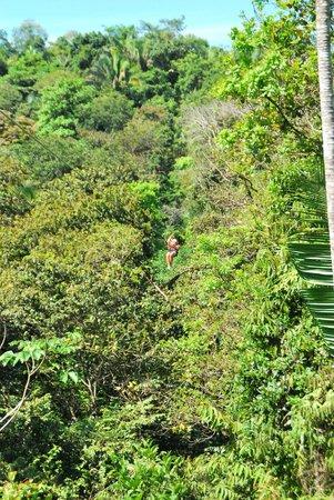 Travel Around Costa Rica Transportation and Guides: Ziplining
