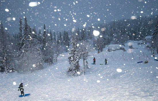 Lapland Hotel Pallas : Surrounding woodland