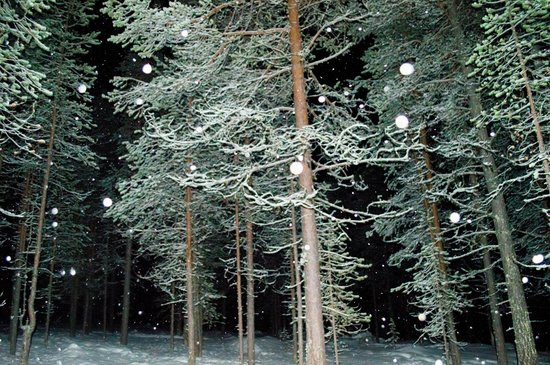 Lapland Hotel Pallas : Woodland on the Husky excursion