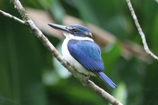 Namale Resort & Spa: Our feathered friend outside our Bure