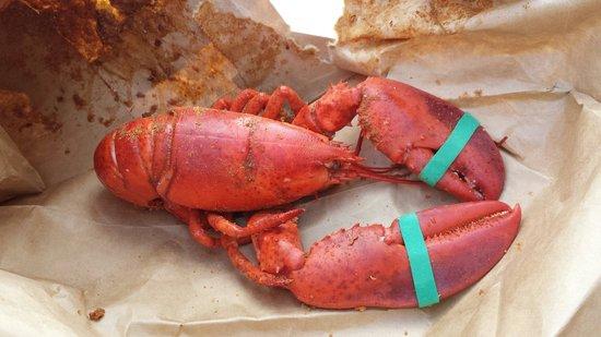 Ms. Apples Crab Shack: Fresh lobster. Steamed. Seasoned. Simple.