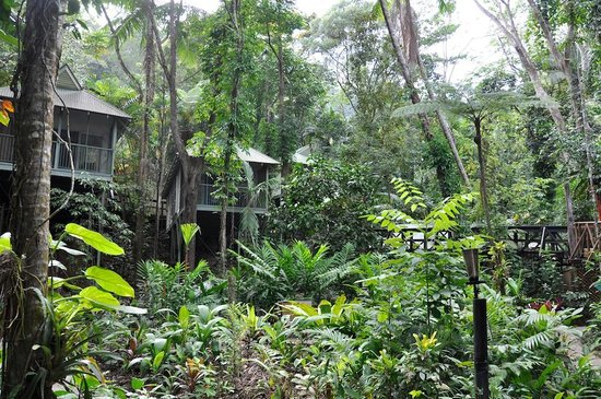 Daintree EcoLodge & Spa: View of the small bungalows