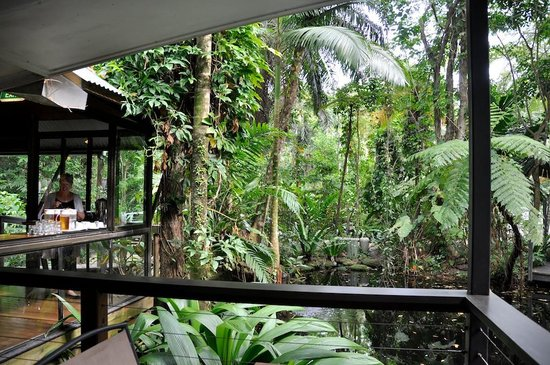 Daintree EcoLodge & Spa: At breakfast