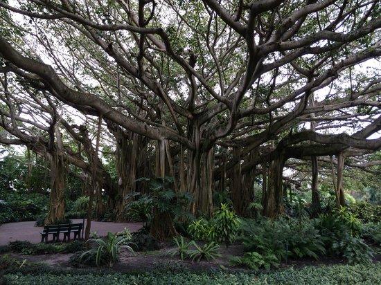 LEGOLAND Florida Resort: Banyon Tree in the Historic Gardens