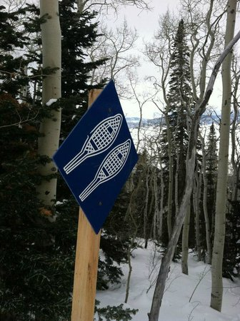Yampatika : Snowshoe trail markers up on the moutnain