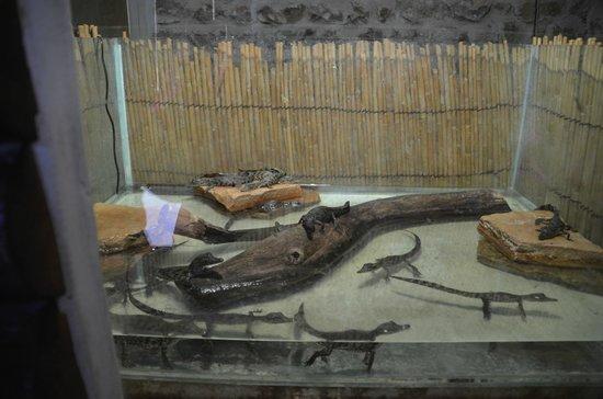 Krokodilfarm Animalia: krokodilbaby's