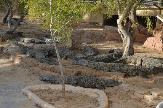 Krokodilfarm Animalia: toch even wat schaduw zoeken onder boom