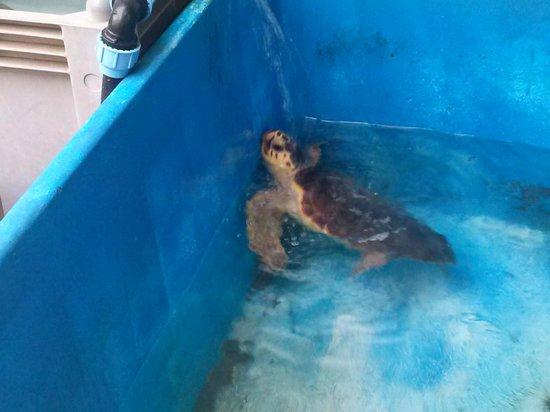 Puesta De Sol Residence Club : ricovero delle tartarughe porto vecchio