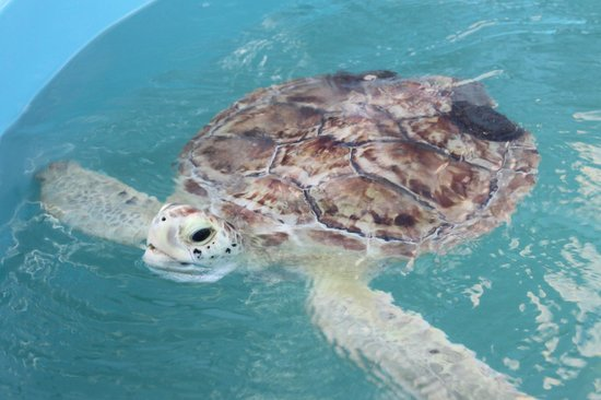 The Turtle Hospital: Tortue