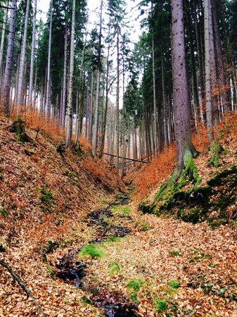 Penzion Rzehaczek: Magic wood nearby