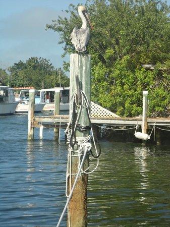 Porky's Bayside Restaurant and Marina: vue sur la marina