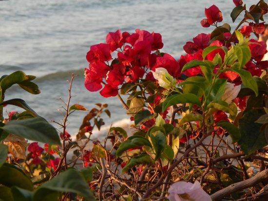 Cesar Apartamentos : las hermosas plantas!!! todo un clasico!