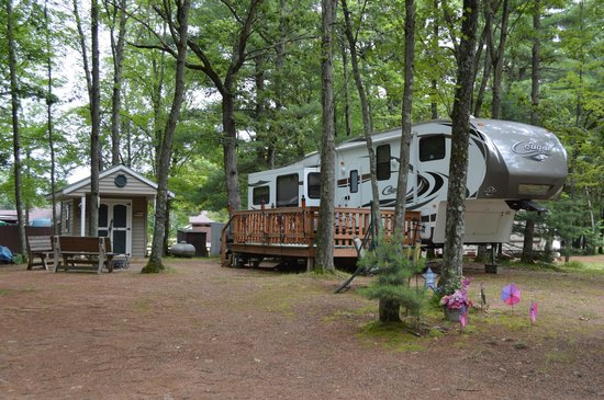 Pineland Camping Park: All wooded sites