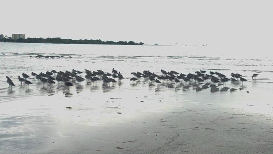 Bunche Beach: more birdies
