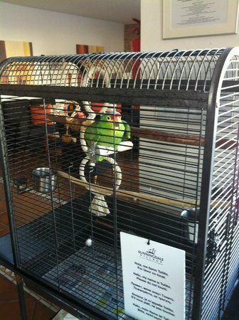 CLC Sunningdale Village : The pet parrot in reception