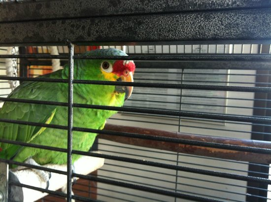 Select Sunningdale : The parrot