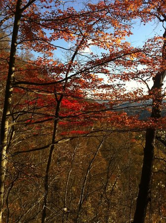 Amicalola Falls State Park : Beautiful Trees