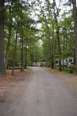 Pineland Camping Park: All wooded campground