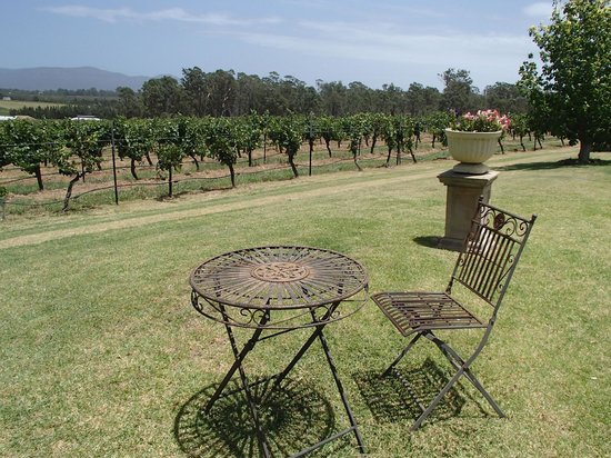 Hunter Valley Wine Tasting Tours : Blueberry Hills