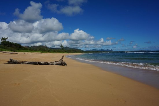 Kauai Beach Villas: A very long beach to have nice walks on with your honey.. hardly any people at all