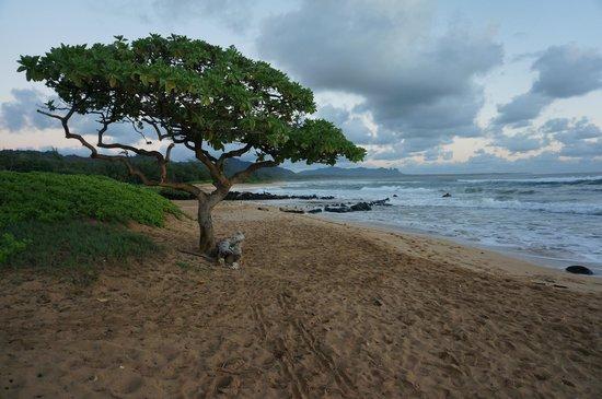 Kauai Beach Villas: The entrance to the beach area