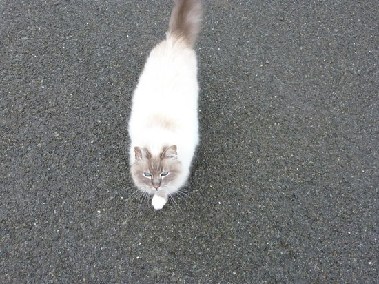 Ryland Estate: Friendly resident cat