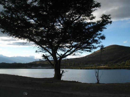 Laguna de Yahuarcocha: espino