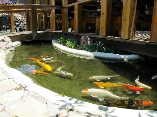 Aceitunas Beer Garden: Koi Fish