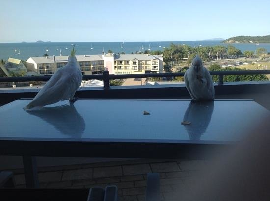 Whitsunday Terraces Resort : visitors on the balcony