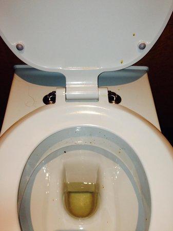 Premier Inn Canterbury City Centre Hotel : dirty toilet