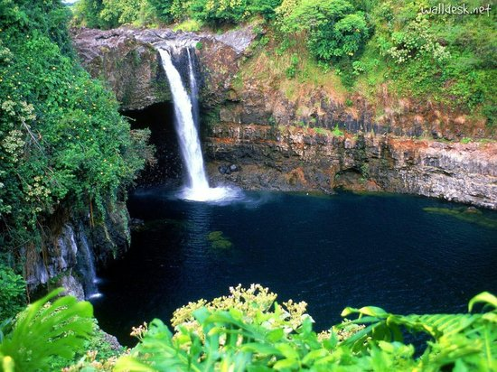 Coconut Cottage Bed & Breakfast : 20 miles from gorgeous waterfalls