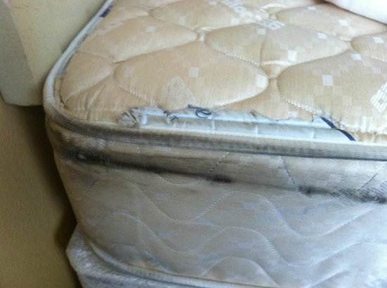 Mold On Mattress Picture Of Sun Inn And Suites Kissimmee